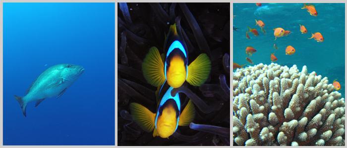Identyfikacja ryb AWARE padi