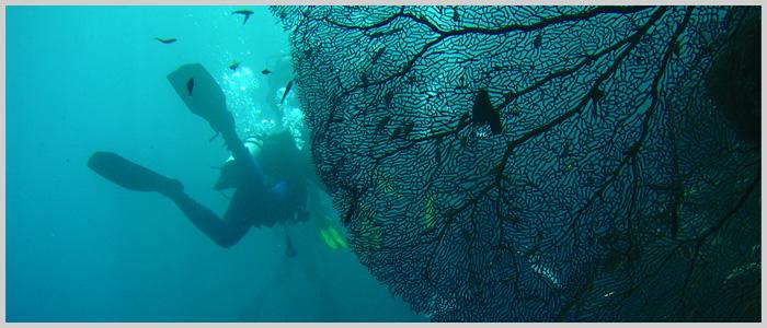 padi Projekt AWARE rozpoznawanie ryb