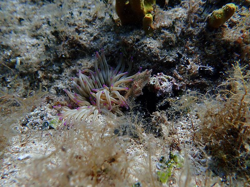 Podwodny świat Wyspa Pag